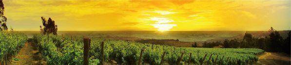 tipos de vinos de jerez