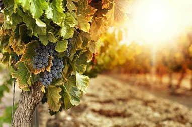 vinos de jerez marcas